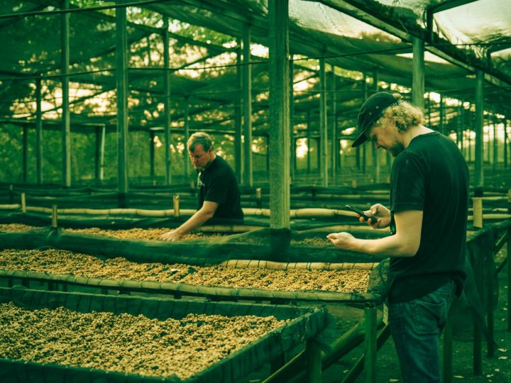 #110 Rock Paper Scissors Indie Roastery: Dark Espresso Brazil 80% Uganda 20%