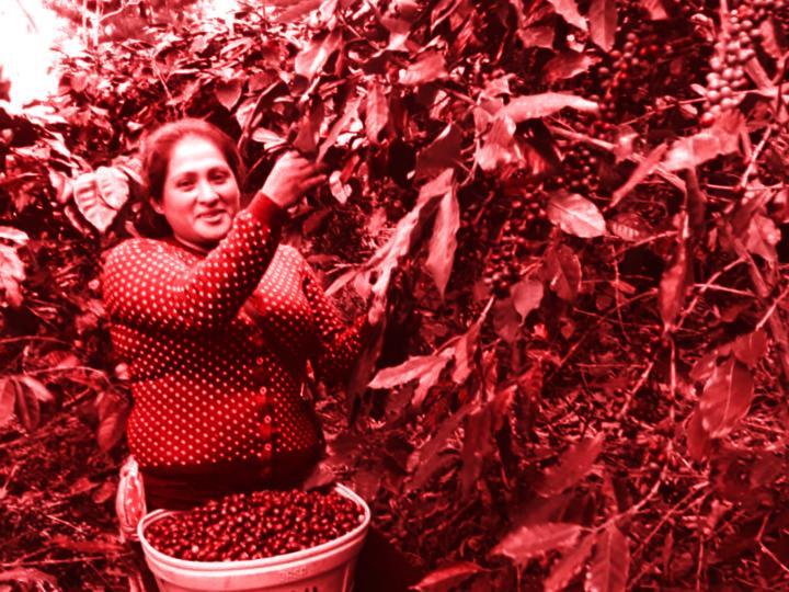 #113 Kaffe Obscura: Peru Finca La Esperanza
