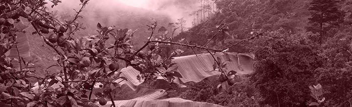 #116 Turun Kahvipaahtimo: Brazil Espirito