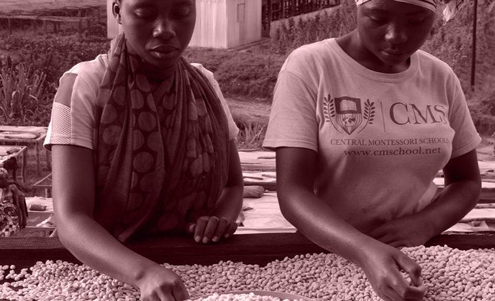#117 Kaffe Obscura: Rwanda Gitesi