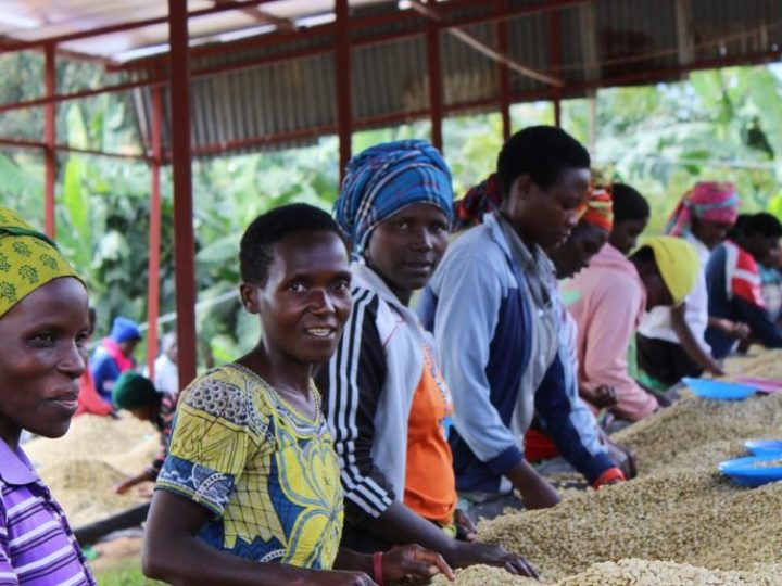 Transparency in coffee production