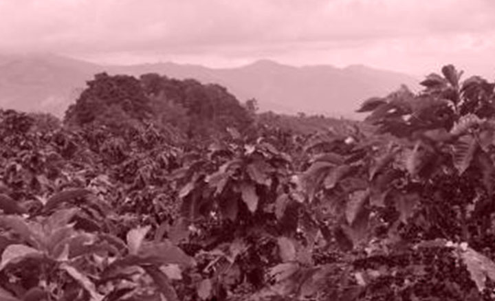#126 Pirkanmaan Paahtimo: Colombia Golden Huila Decaf