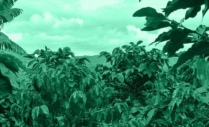 #128 Pirkanmaan Paahtimo: Honduras Santa Rosa Organic