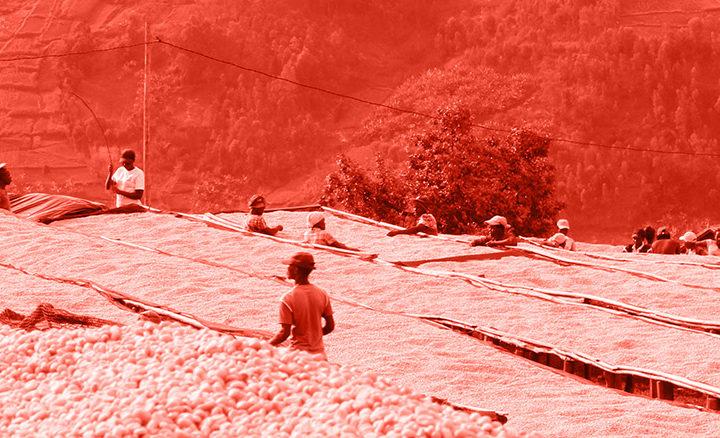 #131 Kaffa Roastery: Rwanda Nyamalinda