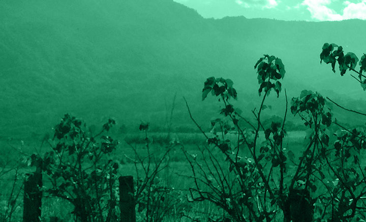 #133 Lehmus Roastery: Mexico Coatapec