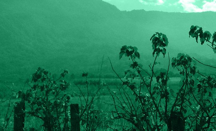 #133 Lehmus Roastery: Meksiko Coatapec