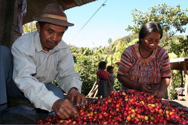 #135 Café Nazca: Guatemala Asoproguate