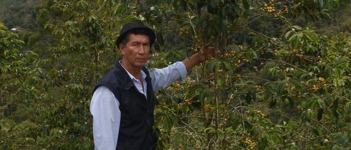 #139 Record Coffee Company: Las Orquideas
