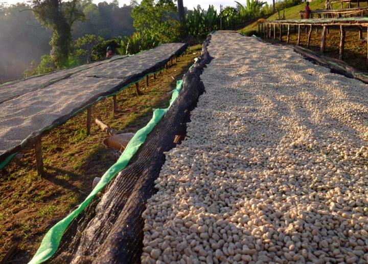 #138 Cafetoria Roastery: Ethiopia Chelbessa
