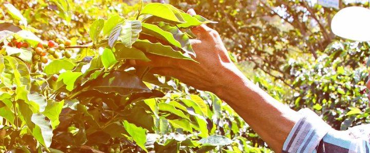 #139 Paahtimo Papu Oy: Honduras, Organic Espresso