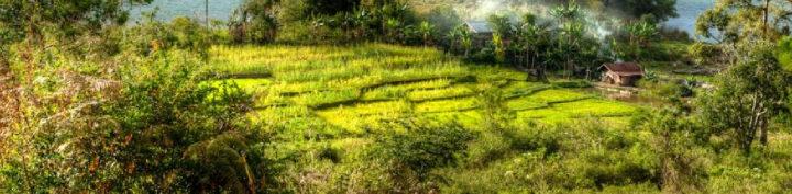 #149 Inka Paahtimo: Sumatra Mandheling