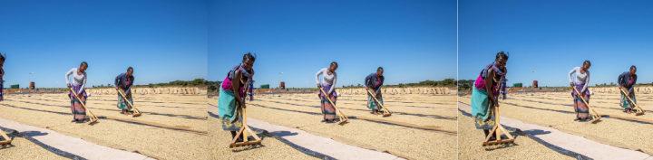 #149 Record Coffee Company: Zambia Red Cherry Gold
