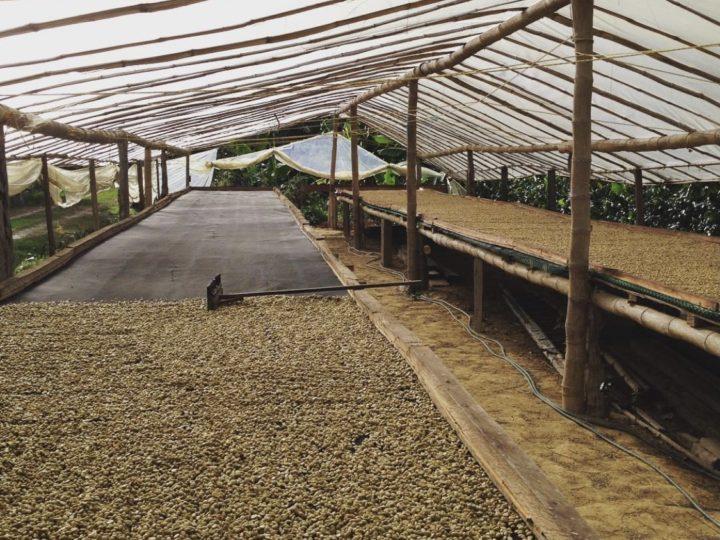 #156 Frukt Coffee Roasters: La Quinta