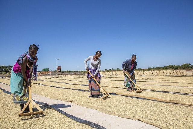 #161 Record Coffee Company: Kateshi
