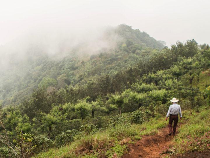 #160 Kahwe: Guatemala Santa Elisa