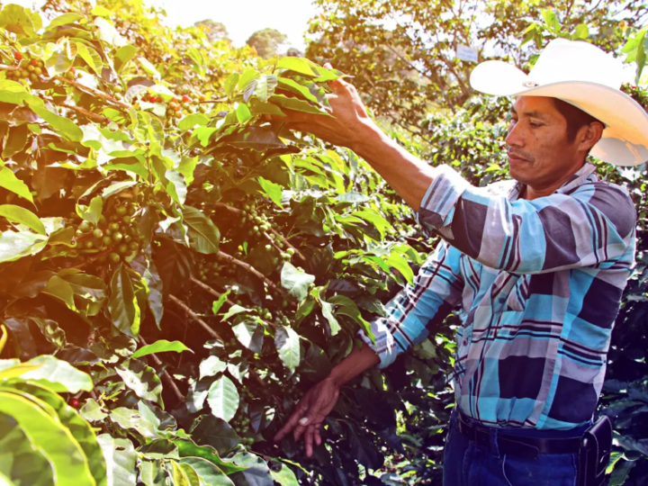 #172 Paahtimo Papu Oy: Honduras, Organic Filter