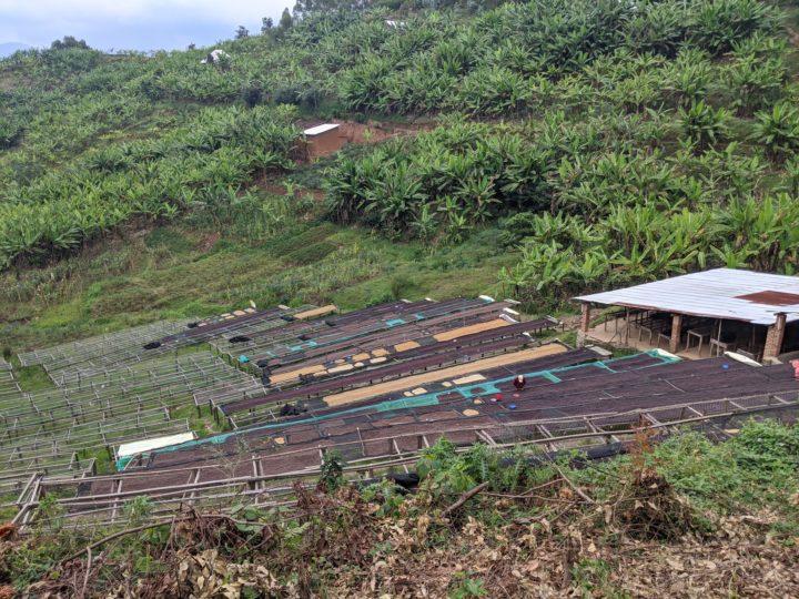 #170 Frukt Coffee Roasters: Cyumba
