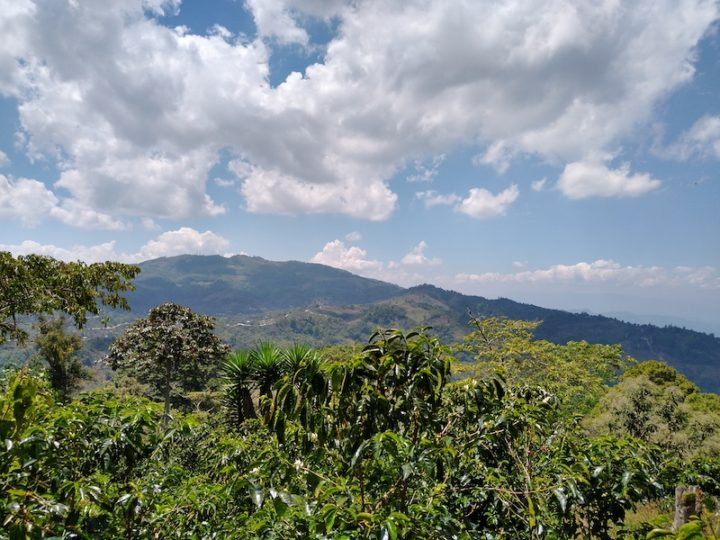 #176 Pirkanmaan Paahtimo: Guatemala Mixtli Organic